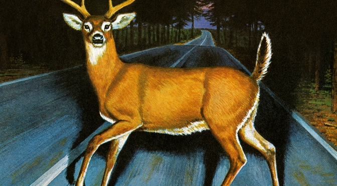 <b>THE DEER IN HEADLIGHT SYNDROME</b>